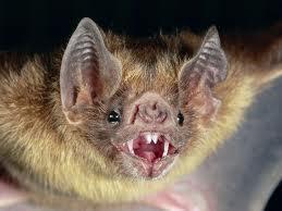 bat. our bat.